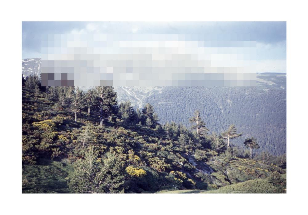 Untitled (p062), 2014