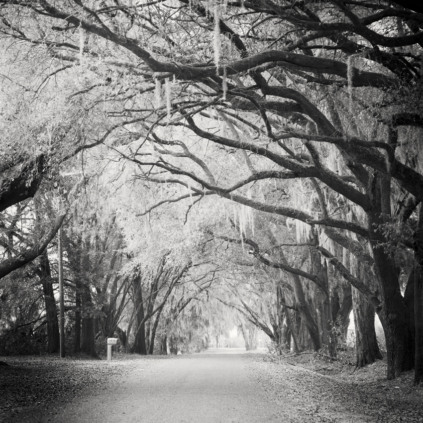 Fairytale Forest, Florida, USA 2016 - Limited Edition Gelatin Silver Print No.: 11860