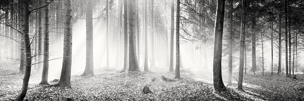 Enchanted Forest, Austria 2013 - Limited Edition Gelatin Silver Print No.: 11496