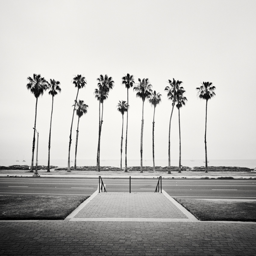 Palm Tree Study #1, CA, USA 2015 - Limited Edition Gelatin Silver Print No.: 11600