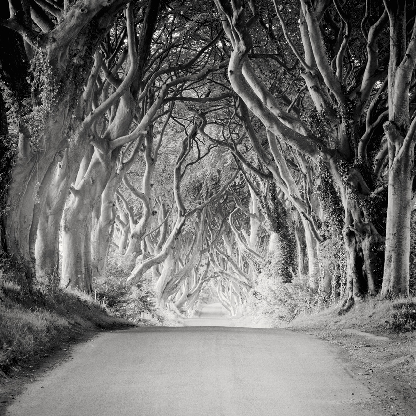 "The Dark Hedges, Ireland 2014 - Limited Edition Gelatin Silver Print No.: 11570 40 x 40cm (15.8 x 15.8""), Edition of 9 60 x 60cm (23.6 x 23.6""), Edition of 9 80 x 80cm (31.5 x 31.5""), Edition of 7 100 x 100cm (39.4 x 39.4""), Edition of 5"