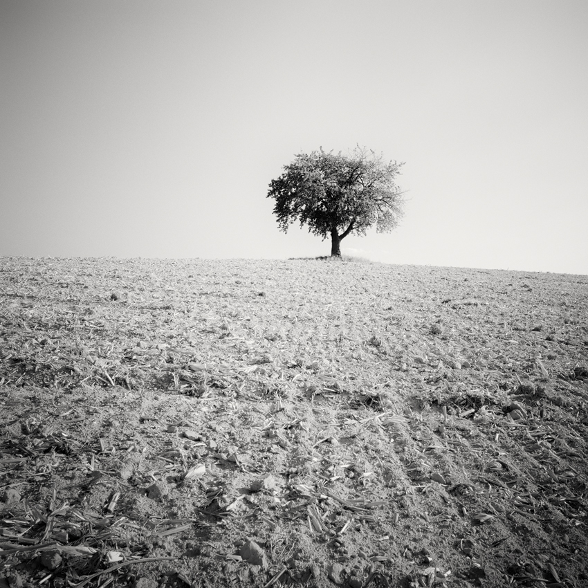 "Lonely Tree Study #2, Austria 2011 - Limited Edition Gelatin Silver Print No.: 11925  40 x 40cm (15.8 x 15.8"") ,  Edition of 9 60 x 60cm (23.6 x 23.6"") ,  Edition of 9 80 x 80cm (31.5 x 31.5"") ,  Edition of 7 100 x 100cm (39.4 x 39.4"") ,  Edition of 5"