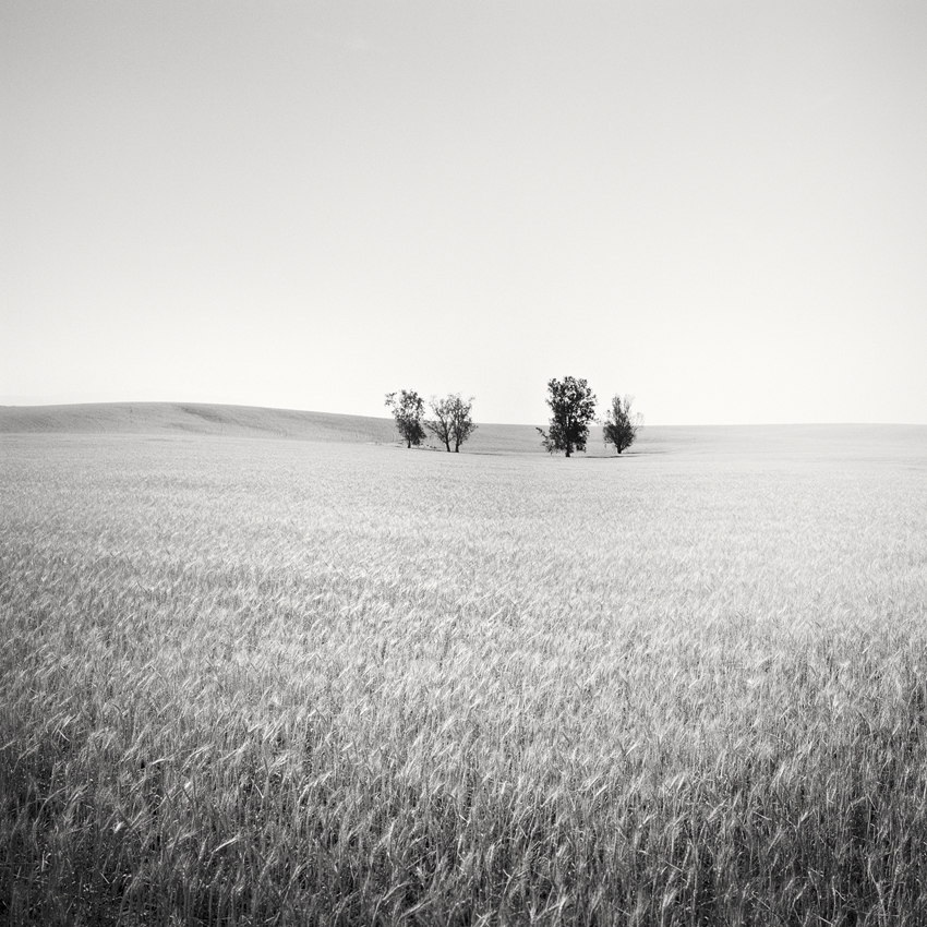 "Trees in wheat field, CA, USA 2015 - Limited Edition Gelatin Silver Print No.: 11941  40 x 40cm (15.8 x 15.8"") ,  Edition of 9 60 x 60cm (23.6 x 23.6"") ,  Edition of 9 80 x 80cm (31.5 x 31.5"") ,  Edition of 7 100 x 100cm (39.4 x 39.4"") ,  Edition of 5"
