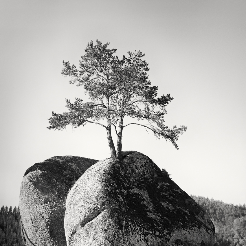 "Tree on the Rock, Austria 2011 - Limited Edition Gelatin Silver Print No.: 11010  40 x 40cm (15.8 x 15.8"") ,  Edition of 9 60 x 60cm (23.6 x 23.6"") ,  Edition of 9 80 x 80cm (31.5 x 31.5"") ,  Edition of 7 100 x 100cm (39.4 x 39.4"") ,  Edition of 5"