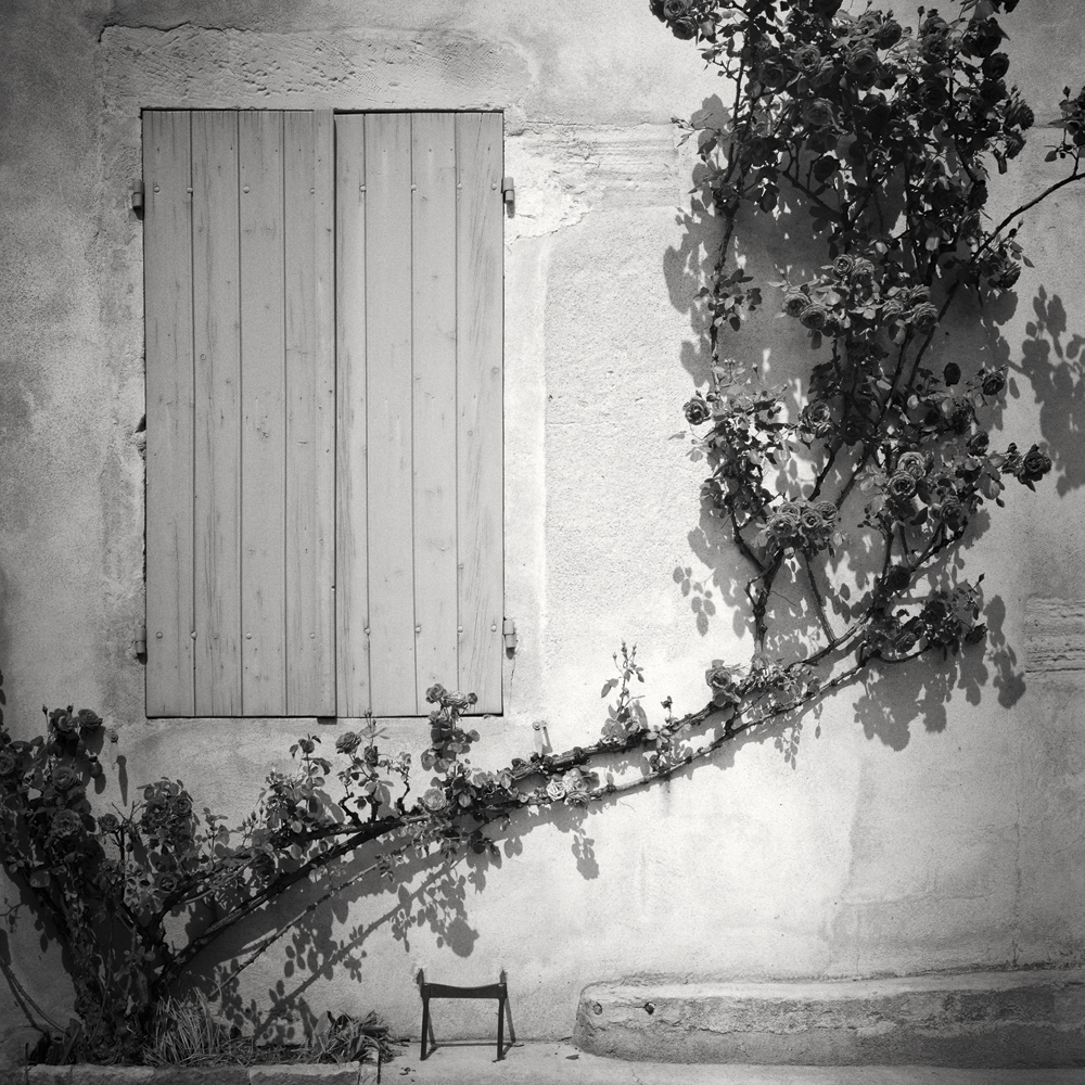 Rosa Wichuraiana, France 2018 - No.: 18035  Toned gelatin silver print, hand signed, dated and numbered 40x40cm, edition of 9 60x60cm, edition of 9 80x80cm, edition of 7 100x100cm, edition of 5