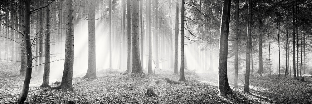 Copy of Enchanted Forest, Austria 2013 - No.: 11496