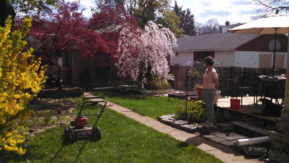 Backyard 2015.