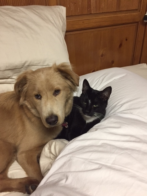 Tessa and Sammy snuggled on bed.JPG