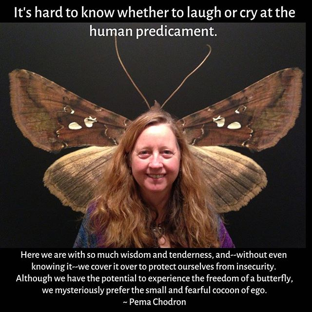 I took this photo of Gretta at an amazing exhibit of large-scale moth photographs by Jim des Rivieres at the Museum of Natural History, back in 2013. . I find it both funny and poignant. It taps in to the beauty and fragility and interconnectedness of life. . We are wondrous creatures, but our experiences in life leave most of us feeling too vulnerable to be ourselves in every situation. We hide or perform, with an eye to the observer, instead of staying in touch with our innate sense of wonder, curiosity, happiness and satisfaction. . Here's to our continued journey of wriggling out of the cocoon of ego, into the lovely night of unknowing and discovery. . . . . #mindful #mindfulness #mindfulliving #wisdom #wisdomforlife #meditation #healing #photooftheday #quoteoftheday #inspiringquotes #moths #jimdesrivieres #museumofnaturalhistory #pemachodron #mindyourweather