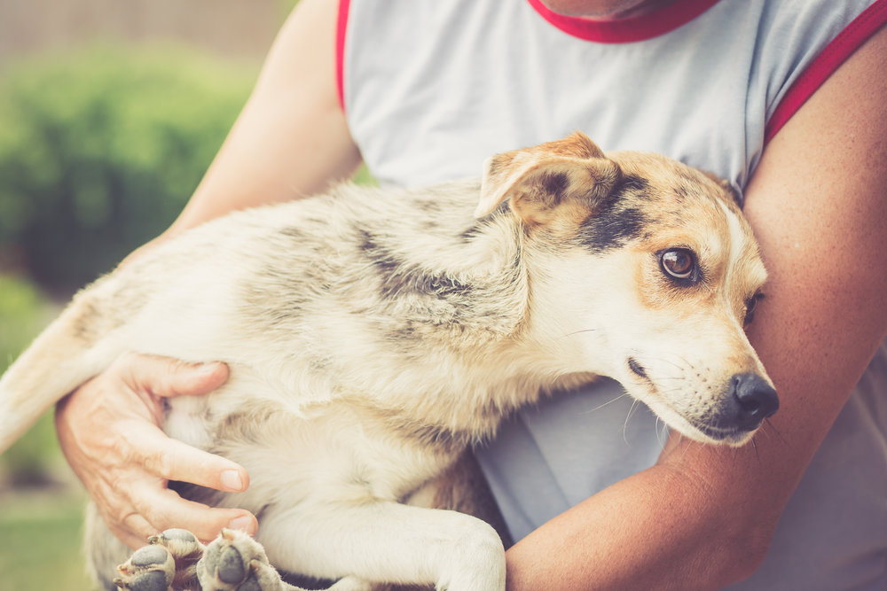 street dog DOI blog.jpg