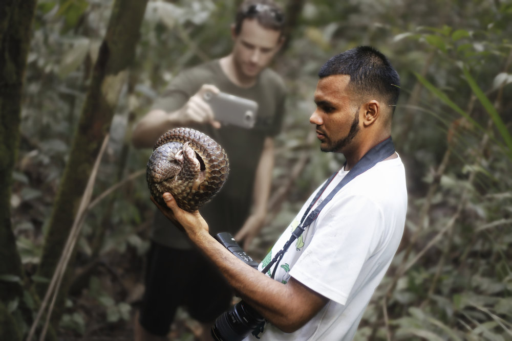 SHAVEZ CHEEMA HANDLING A PANGOLIN, WHICH IS NATIVE TO BRUNEI AND aN IUCN Red List crITICALLY eNDANGERED SPECIES.