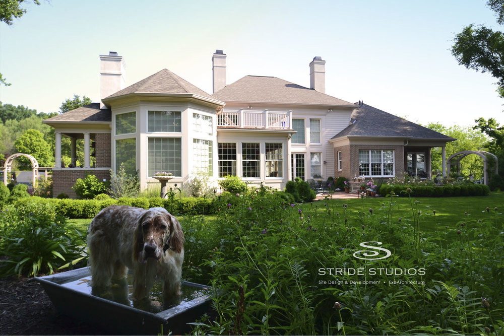 40-stride-studios-private-garden-space-water-spaniel-dog.jpg