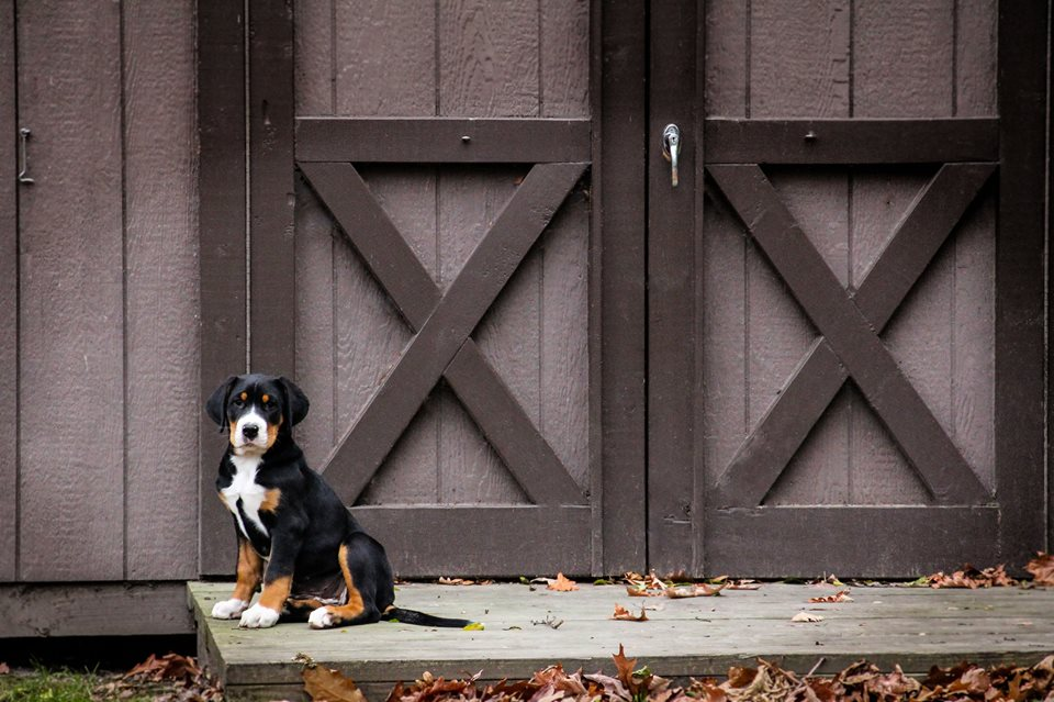 Swissy Barn.jpg