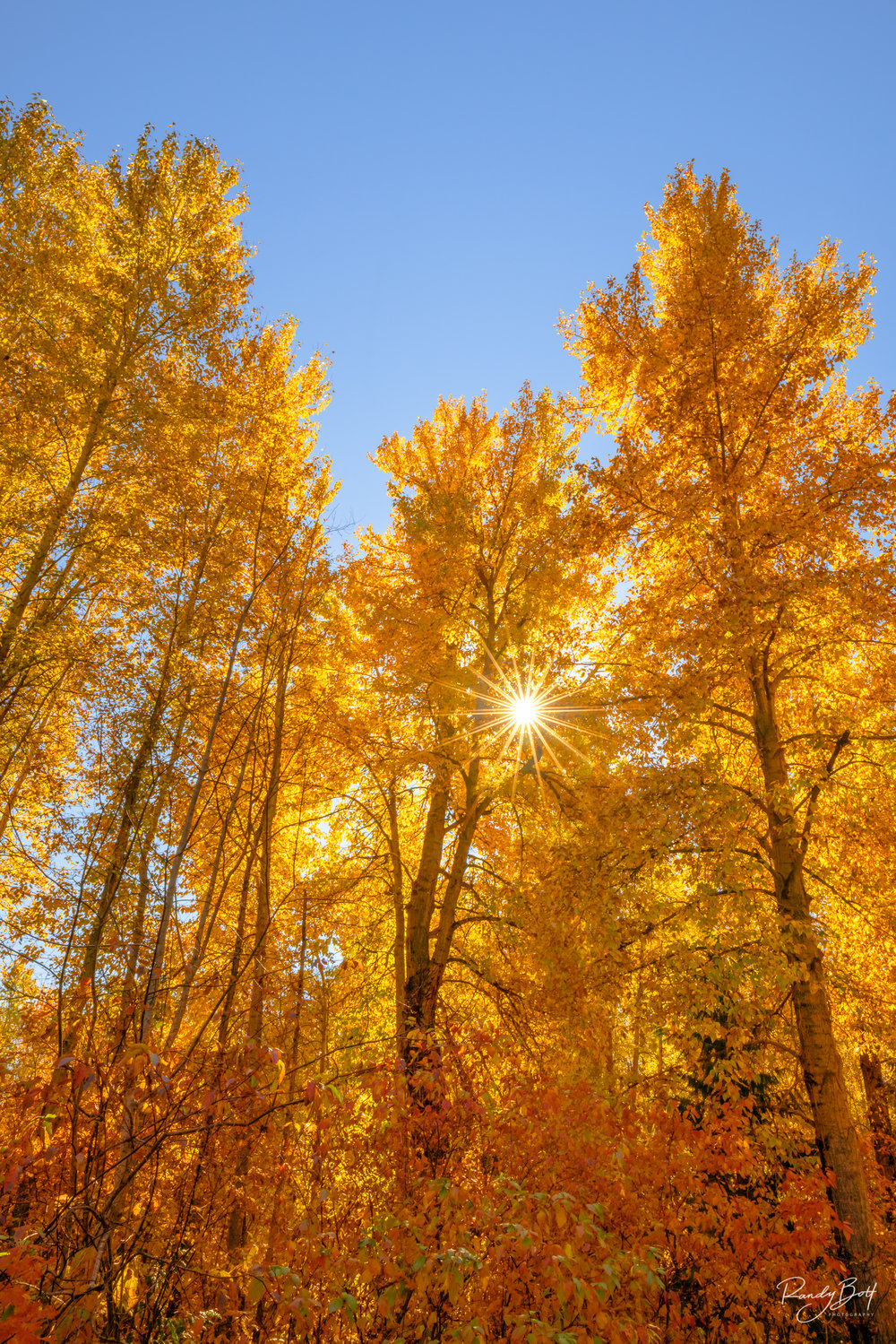 Image taken near Lake Wenatchee this fall. Enhanced using Solid Color Layers.