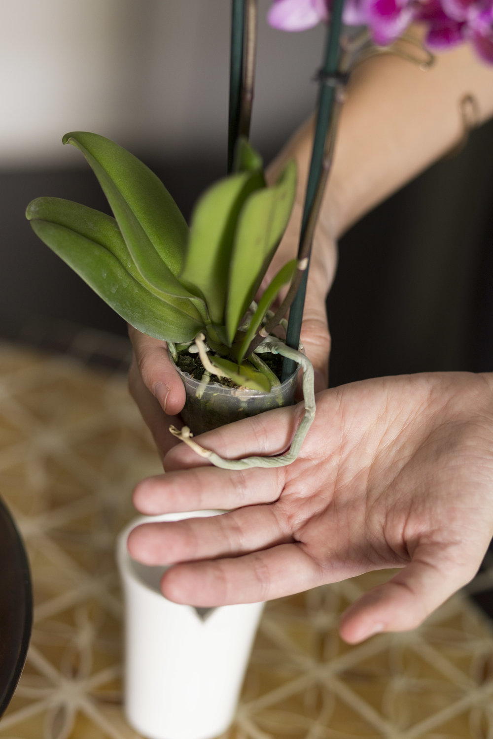 Espresso Care Your Orchid Questions
