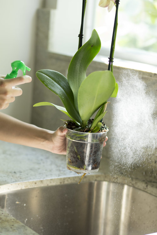 When Blooming Ends A Guide Your Orchid Questions