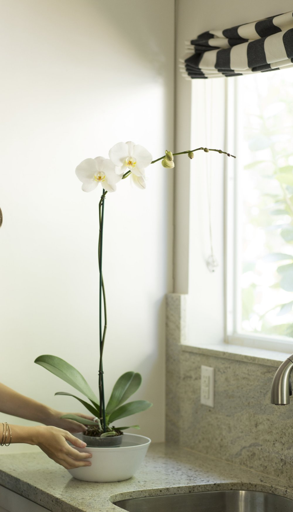 phalaenopsis orchid watering instructions
