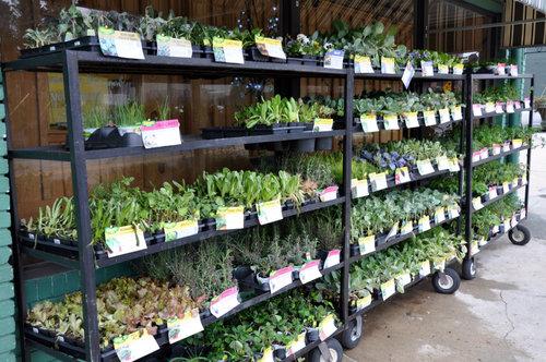Lawn & Garden — Barnes Supply Co.
