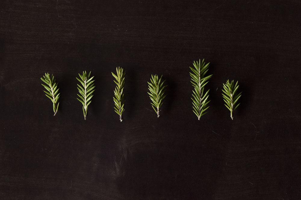 spruce needles tea