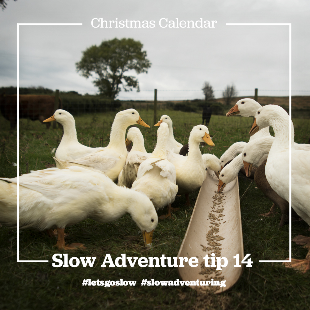 slow-adventure-tip-14-Organic farm north ireland.jpg