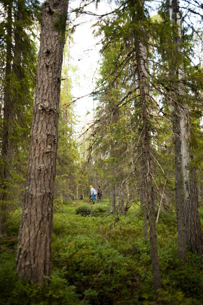 wilderness forest Taivalkoski
