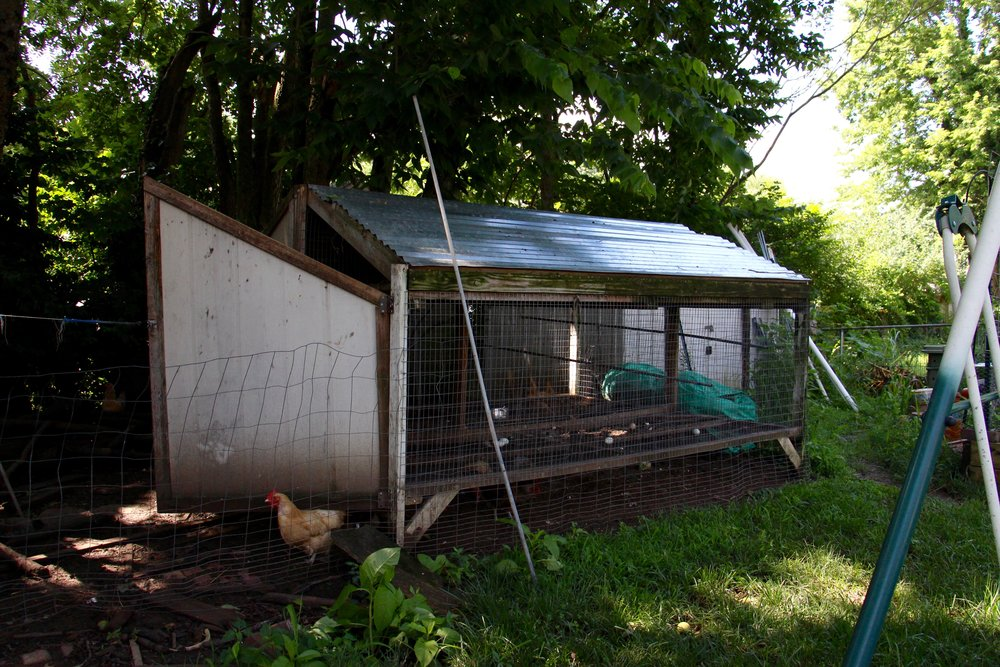 Christian designed and built the chicken coop that's in their backyard urban farm