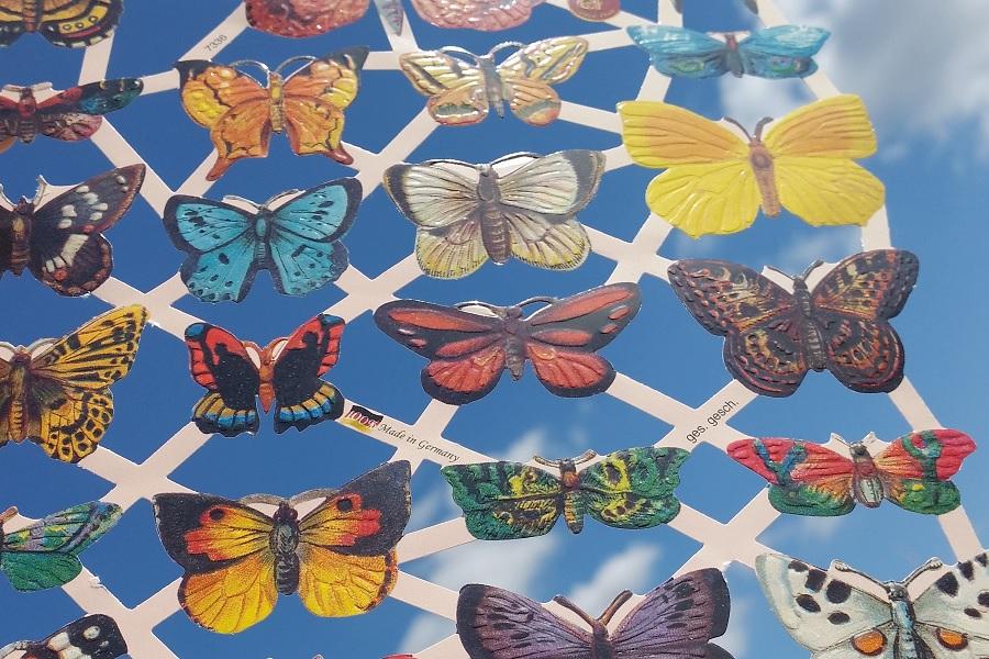 2018-07-15_Lets Butterfly 2018 c.jpg