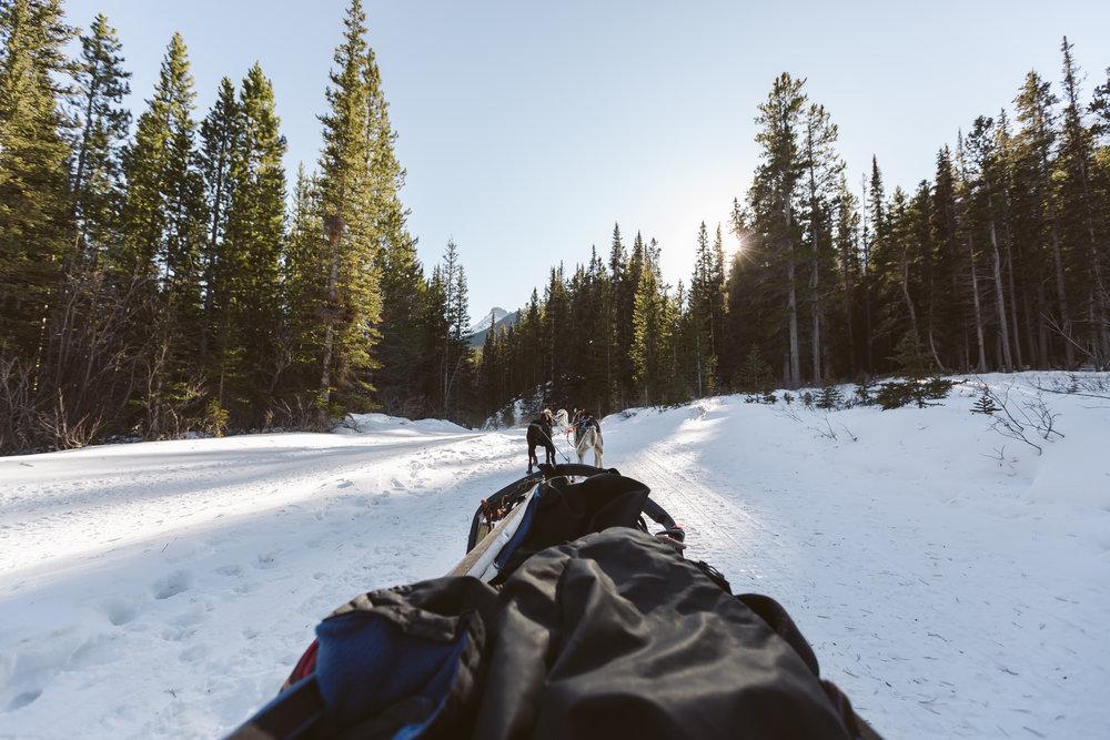 Banff Lake Louise x Howling Dog Tours