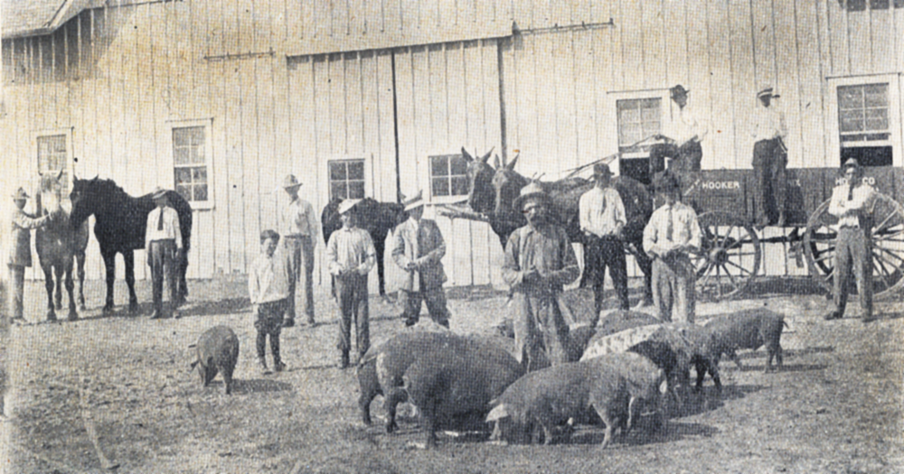 CSSA farm feeding, 1912.
