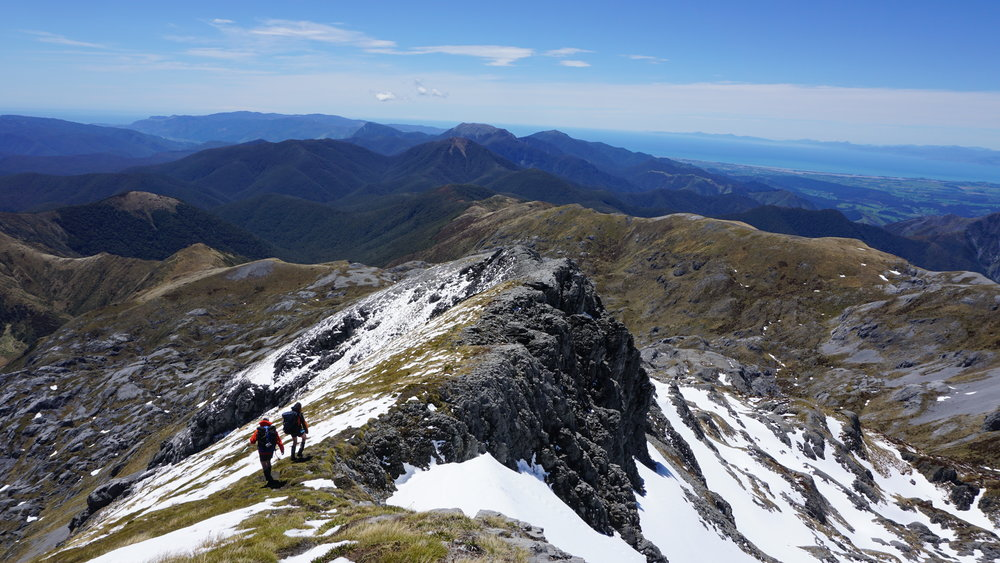 Descending the ridge on Mt Arthur. Tasman Bay in the background.