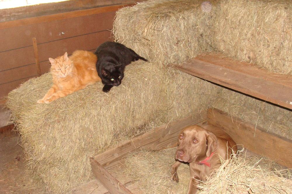 DSC08110 Toby & Cats.JPG