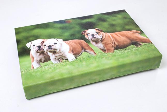 Canvas Print of Puppies.jpg