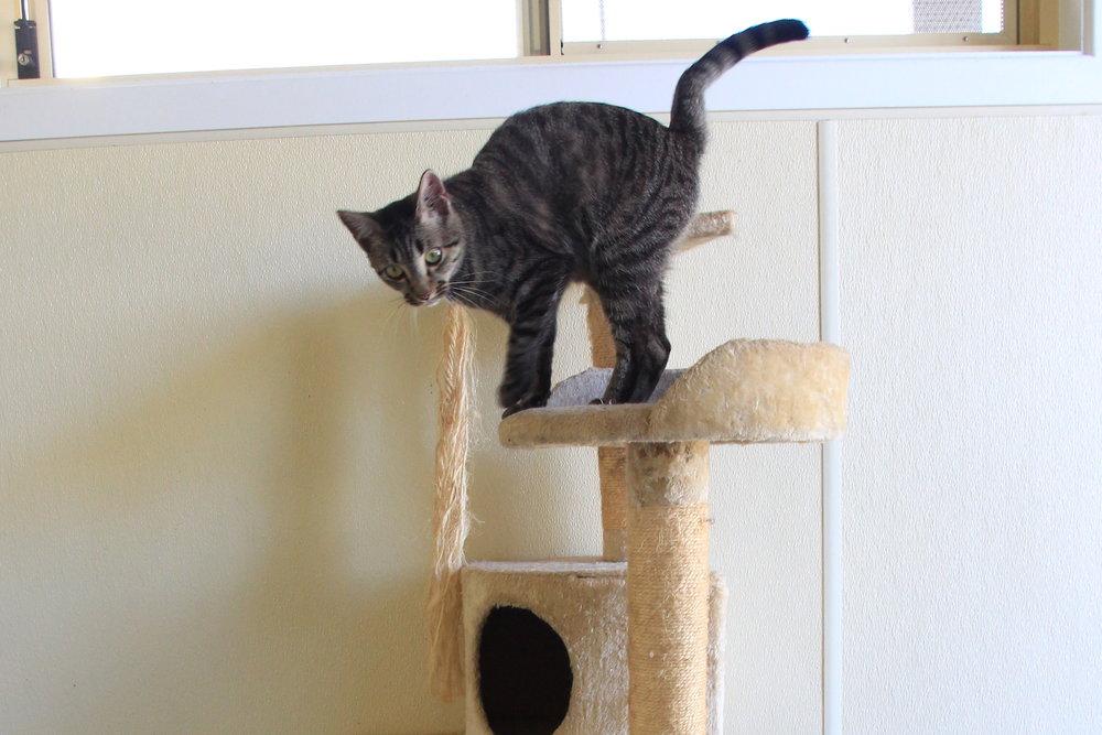 Individual animal housing