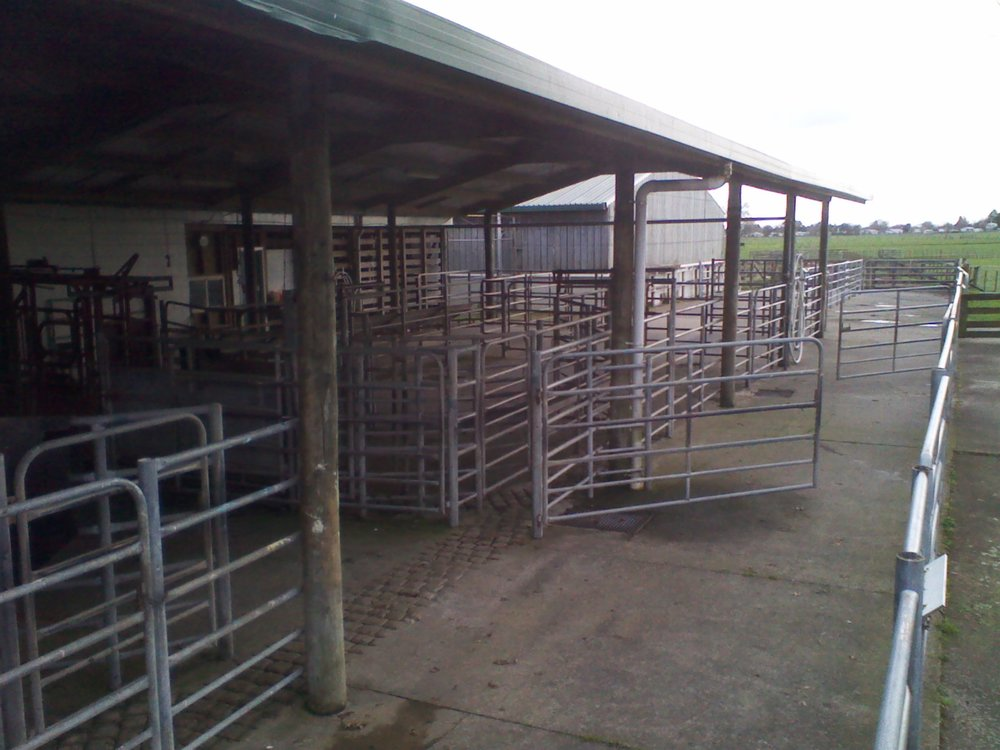 Covered cattle yards