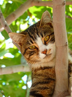 cat-61079__340.jpg