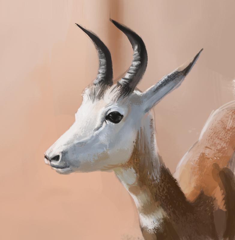 deer study post.jpg