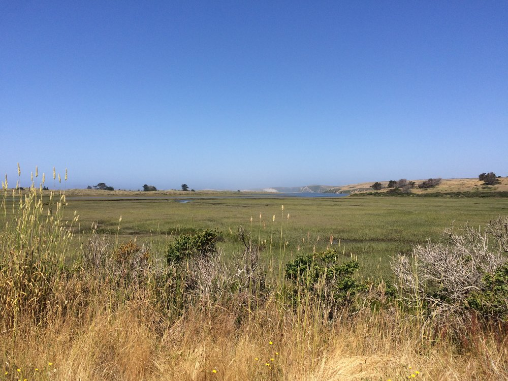 View of the estuary from Muddy Hollow Trail, Point Reyes National Seashore. Image by Gitanjali Bhattacharjee.