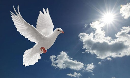 hd-dove-wallpapers.jpg