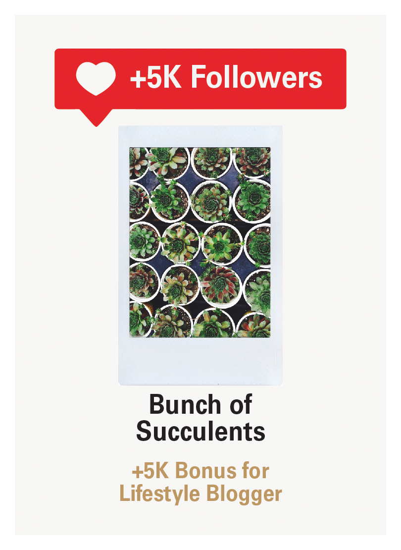 blessed-lifestyle-succulents.png