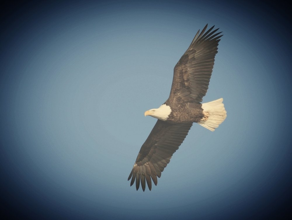 We are so blessed to have 4+ eagles nest on Big Blake Lake! Guests talk about watching them throughout their stay!