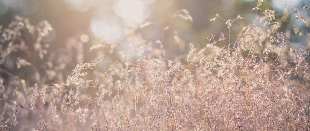 grass-1568789_1920 (1).jpg