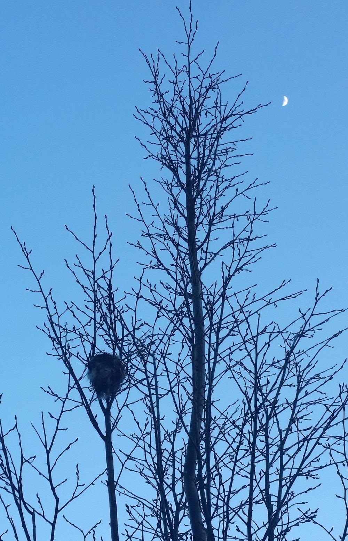 Moon nest.jpg