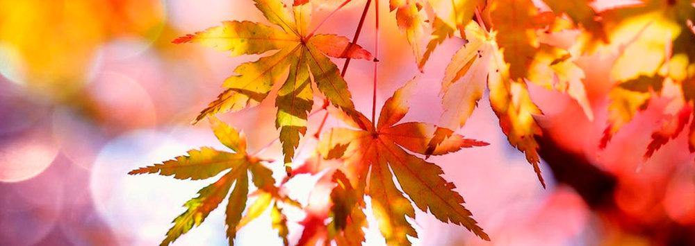 fall-content.jpg