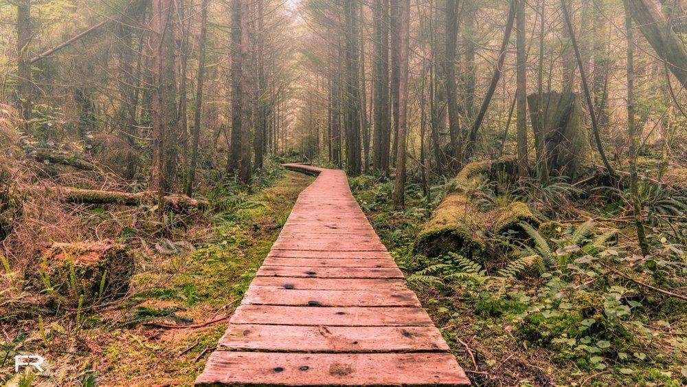 Forrest Walk Tofino-1.jpg