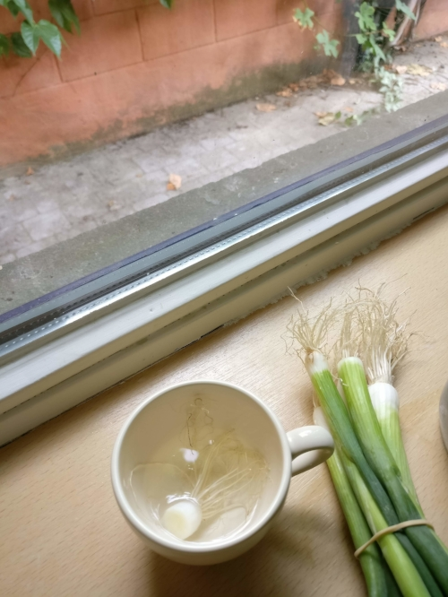 Grow your own spring onions with leftovers
