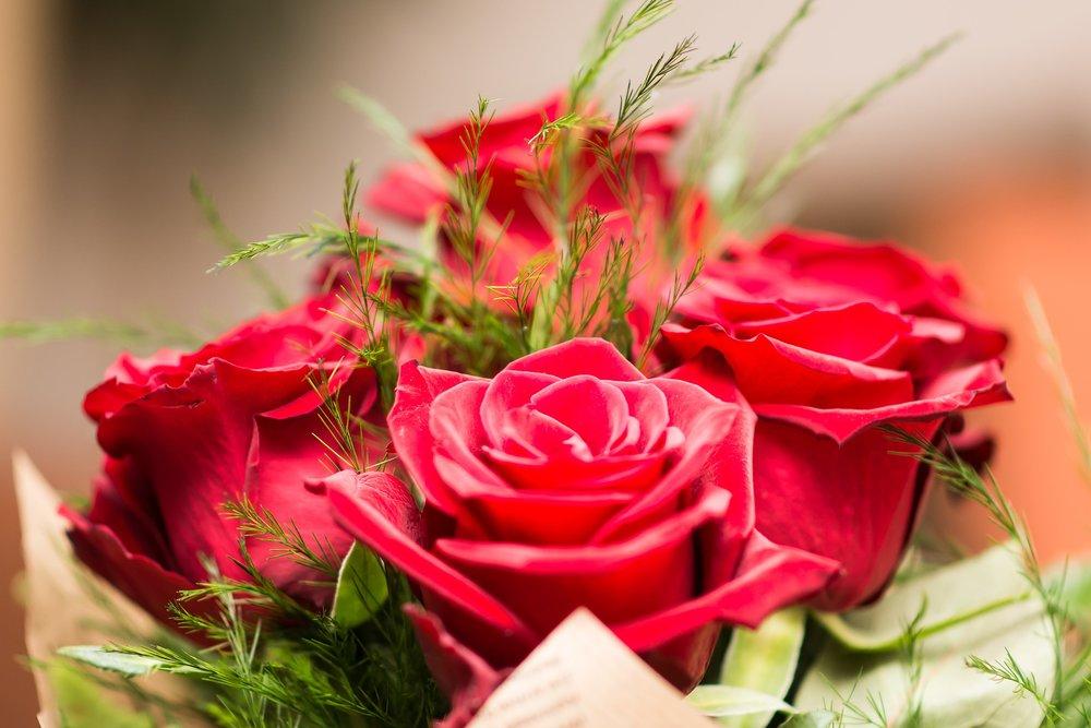 flower-3127810_1920.jpg