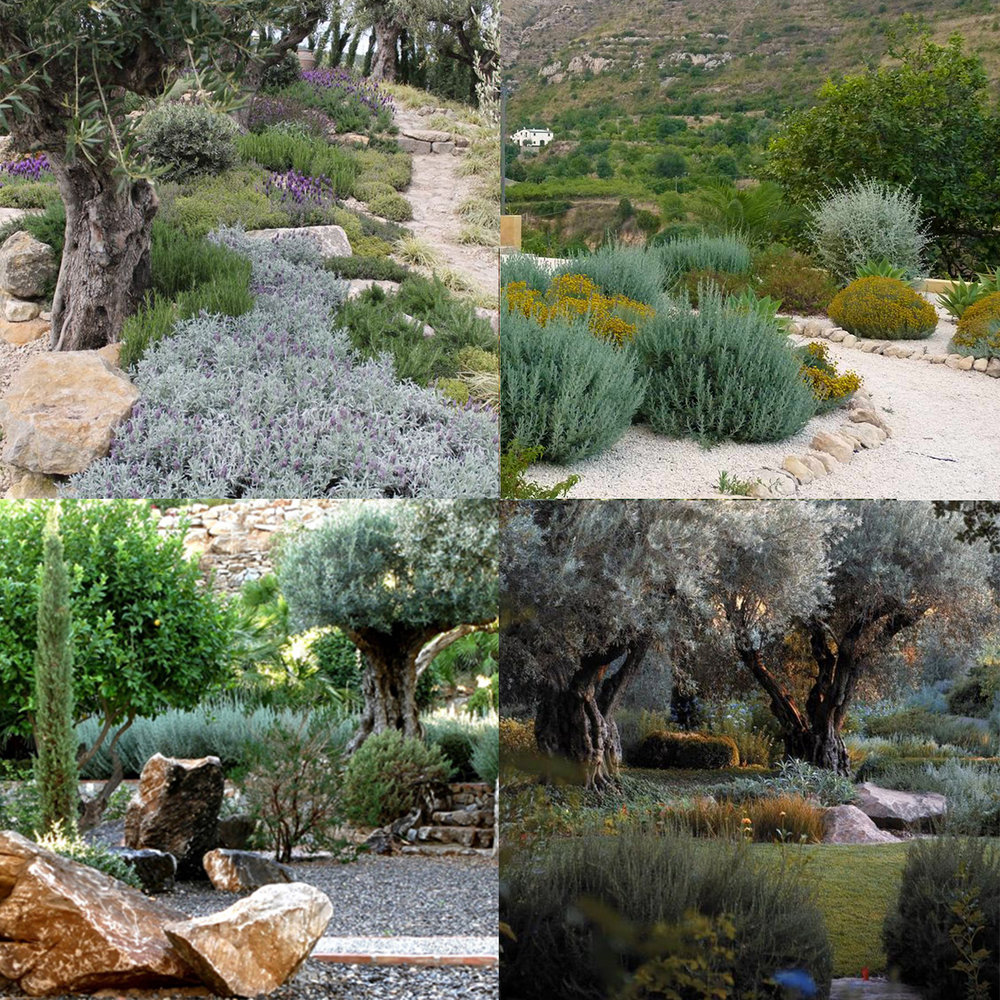 Jard n mediterr neo altascopas for Plantas jardin mediterraneo