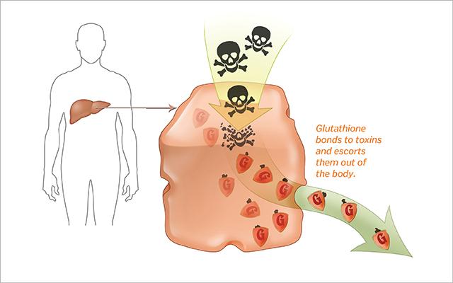 Glutathione-Detoxification.jpeg