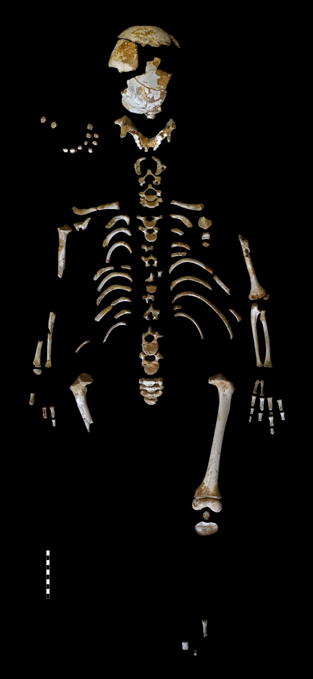 The skeleton is one of the most complete Neanderthal children ever found. Paleoanthropology Group MNCN-CSIC