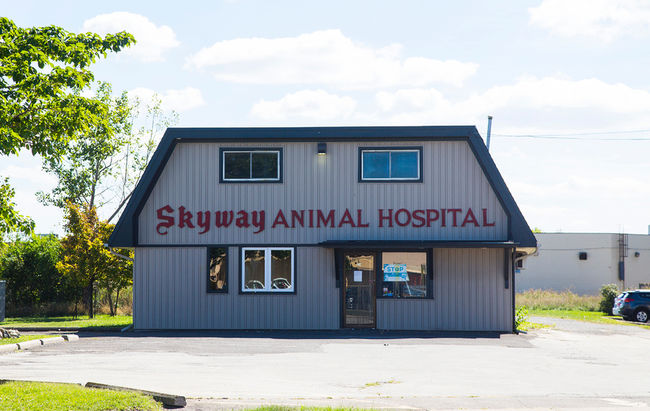 Dr. Mahavir Singh Rekhi of the Skyway Animal Hospital in St. Catharines was caught on camera abusing animals in his care. Standard Photo
